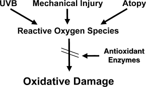 oxistress.png