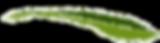 logo Lundi du chanvre.png