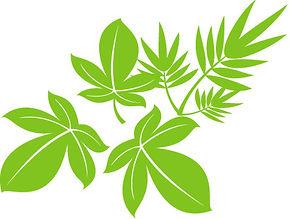 vector_tree_leaf_557965.jpg