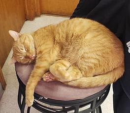 orion oaks animal cat_edited.jpg