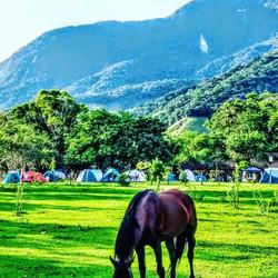 Camping cavalos