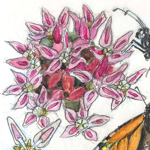 Monarch Butterfly Host Plants: Sun, June 27, 2021 | 10am - 1pm PT