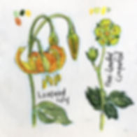 large-leafed-lupine.jpg