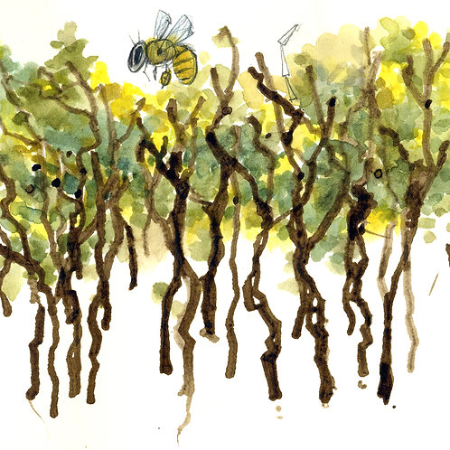 SERIES: The Structure of Trees; The Gesture of Trees | 9/11, 9/25