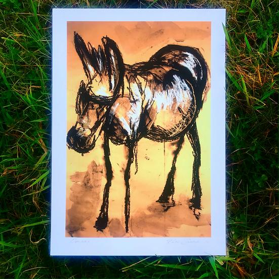 Donkey | Fine Art Print
