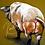 Thumbnail: Pig in a G-String   Fine Art Print