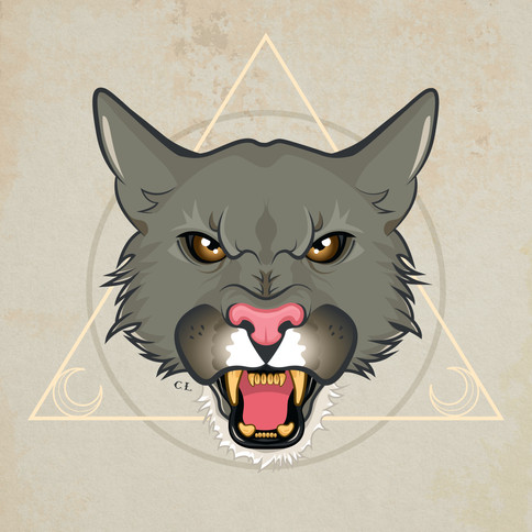 Puma cat