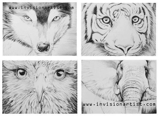 Four Animal Sketchs 2012.jpg