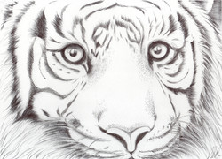 Animal Kingdom.Wild Cat.sm