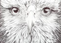 Animal Kingdom.Bird Of Prey mid