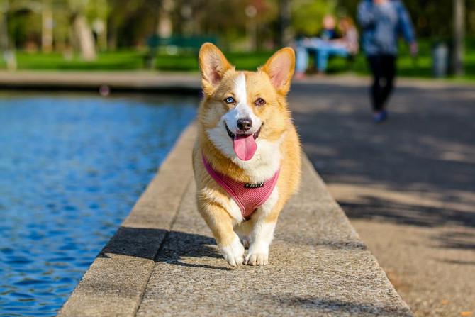 Are Service Dogs the New Medical Marijuana?