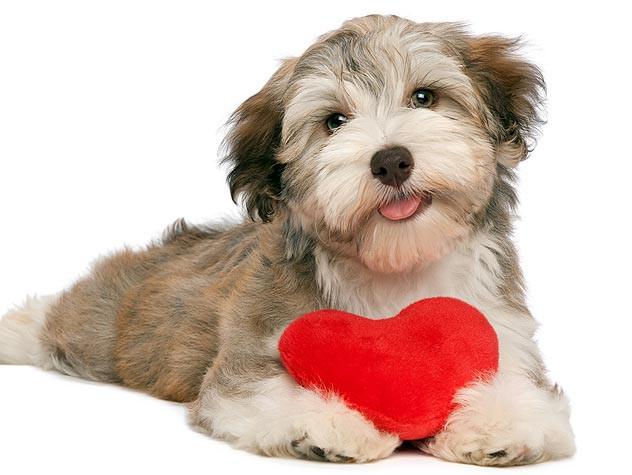 Love Me, Love My Dog