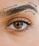 eyebrow-waxing-sections.jpg