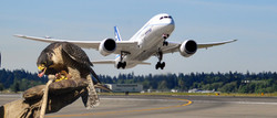 Erradicando plagas de aves en aeropu