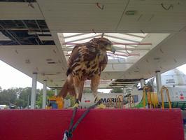 control de palomas en empresas
