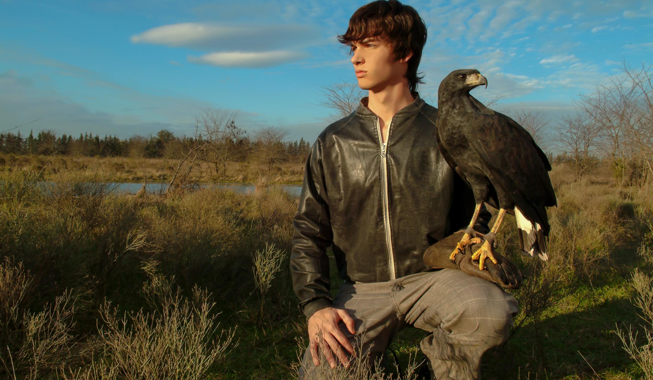 Aguila negra cetreria Argentina