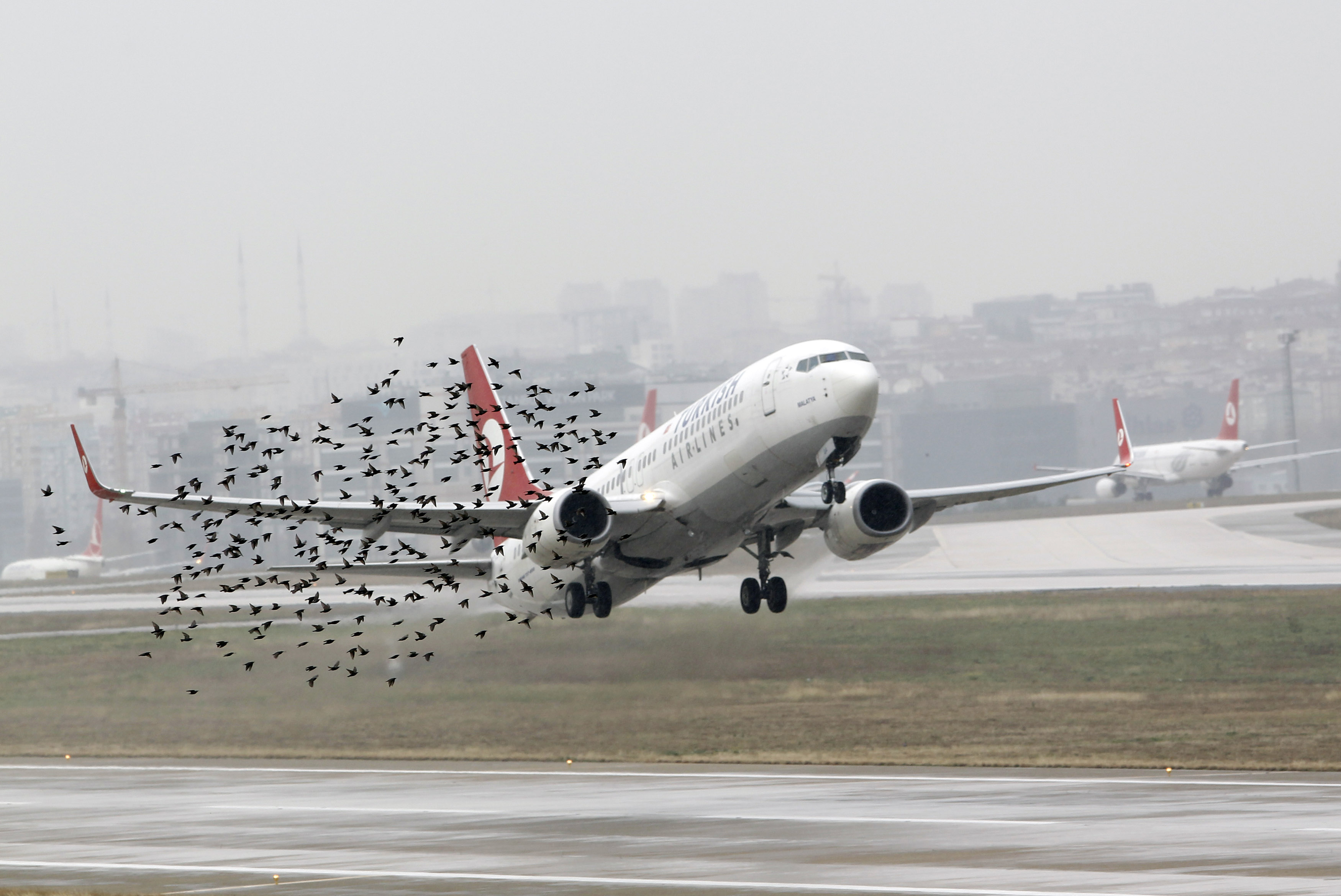 plaga de aves en aeropuertos