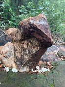Flora at Grootfontein (2).jpeg