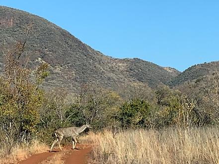 Fauna at Grootfontein (4).jpeg