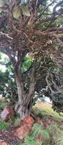 Flora at Grootfontein (4).jpeg