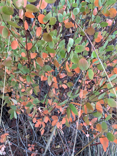 Flora at Grootfontein (12).jpeg