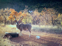 Fauna at Grootfontein (3).jpeg