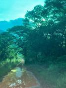 Flora at Grootfontein (1).jpeg