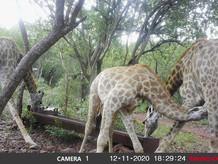 Fauna at Grootfontein (2).jpeg