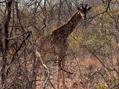 Fauna at Grootfontein (10).jpeg