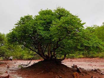 Flora at Grootfontein (7).jpeg