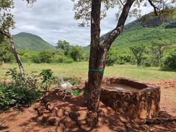 my grootfontein Serengeti Bush Camp (9).