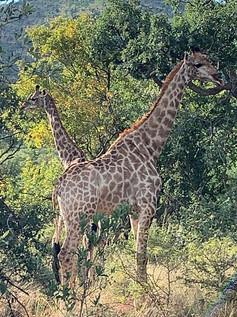 Fauna at Grootfontein (6).jpeg