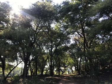 Flora at Grootfontein (6).jpeg