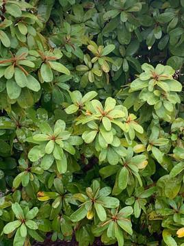 Flora at Grootfontein (11).jpeg