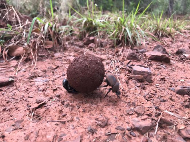 Fauna at Grootfontein (1).jpeg