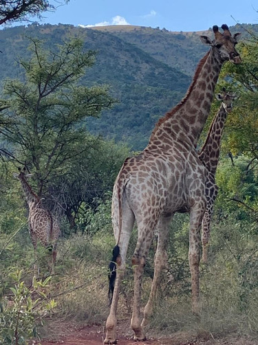 Fauna at Grootfontein (7).jpeg