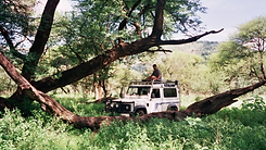 mygrootfontein animal safari