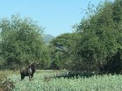 Fauna at Grootfontein (11).jpeg
