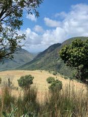 Flora at Grootfontein (9).jpeg
