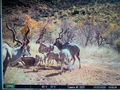 Fauna at Grootfontein (5).jpeg