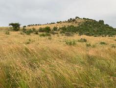 Flora at Grootfontein (13).jpeg