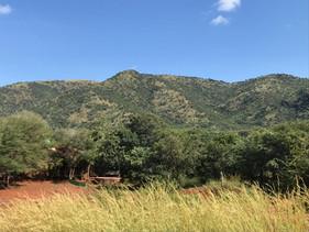 Flora at Grootfontein (5).jpeg