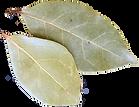 laurel 2 hojas 1.png