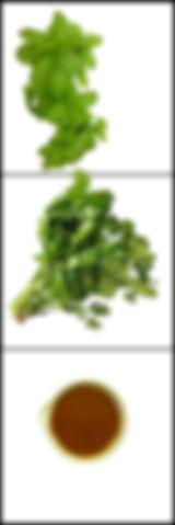 salsa de menta y cilantro salsa de menta