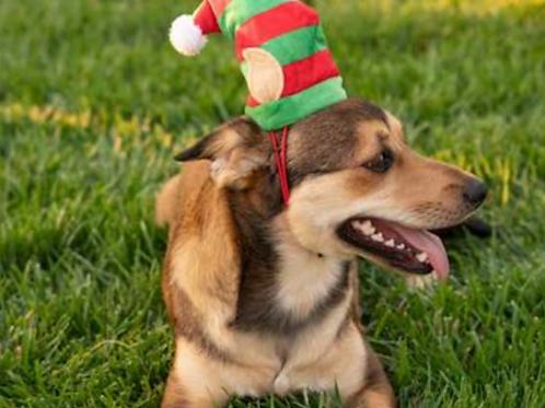 Huxley and Kent Santa Helper Elf Hat