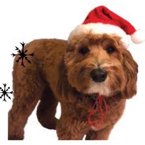 Huxley and Kent Santa Claus Hat