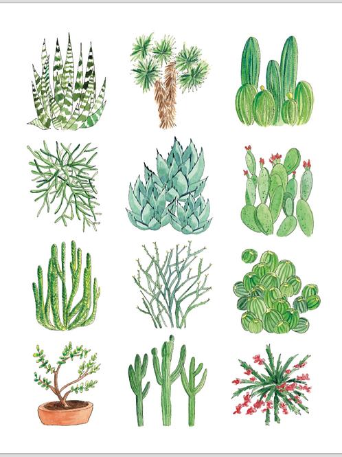 Cactus Print 8.5 x 11