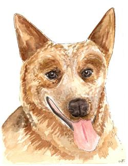 Laura Judson Dog Portrait JPEG