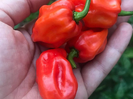 Small Pepper, Big Flavor
