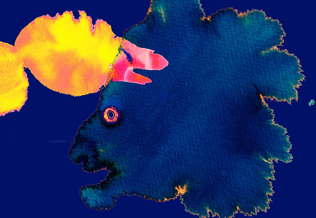 blue yellow fish